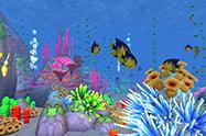 Buceo en arrecifes de coral